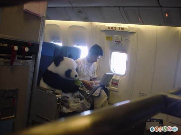 panda-cestuje.jpg