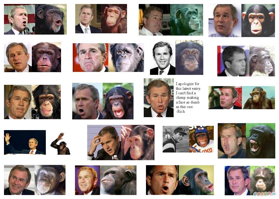 bush-nebo-opice.jpg