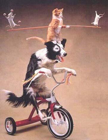 akrobati.jpg
