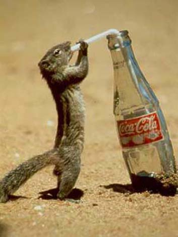 coca-cola-pro-vsechny.jpg