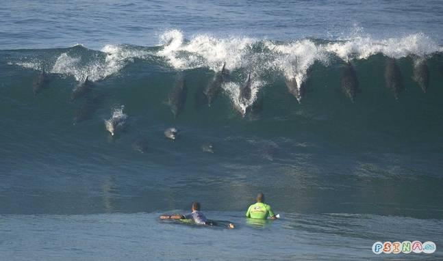 delfini-zkousi-surf.jpg