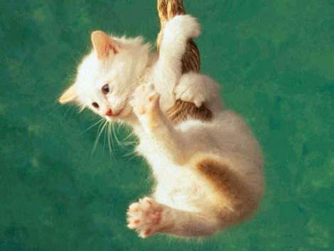 kote-akrobat.jpg