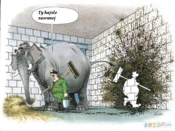slon-ma-prujem.jpg