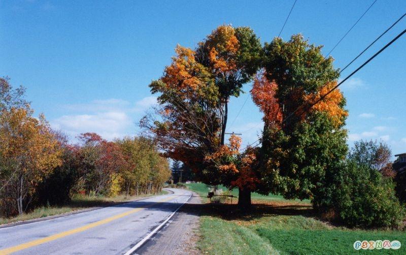 otevreny-strom.jpg
