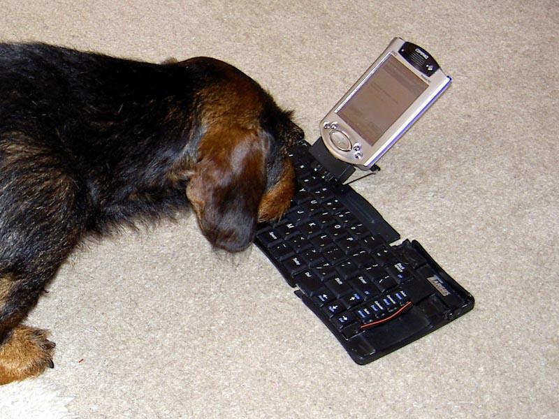 techno-dog.jpg