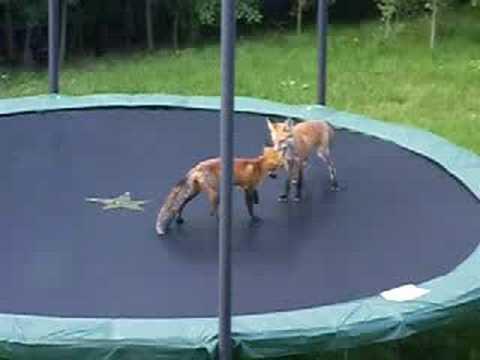 lisaci-na-trampoline_tn.jpg